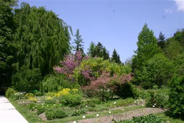 rastlinski sistem, botanični vrt, osrednji del, univerza v ljubljani