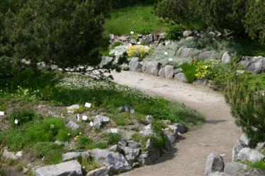 Skalnjak, botanični vrt