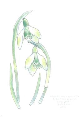 galanthus greeting card 2210