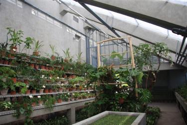 rastlinjak, rastlinjak botanični vrt, stari rastlinjak